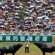 第五届中国石林职业斗牛超级联赛暨首届中国牛王邀请赛公告