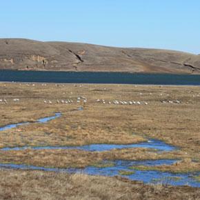 奇山美景大山包的传奇故事——神仙约会的地方:大山包保护区长会口湿地