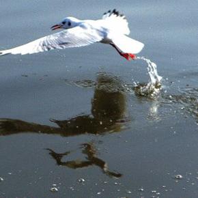 海鸥飞来,惊醒了我的想象