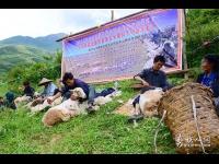 2016年凉山州昭觉县甘多洛古乡果阿丁村举行首届剪羊毛节