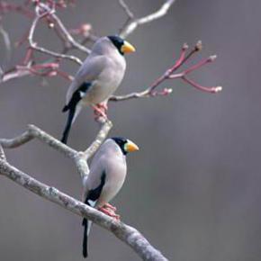 世间奇观:看鸟儿谱写爱的恋曲(天空精灵的美丽爱情)