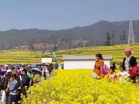 峨山塔甸镇举行第十届原生态彝文化祭鼓暨油菜花旅游节