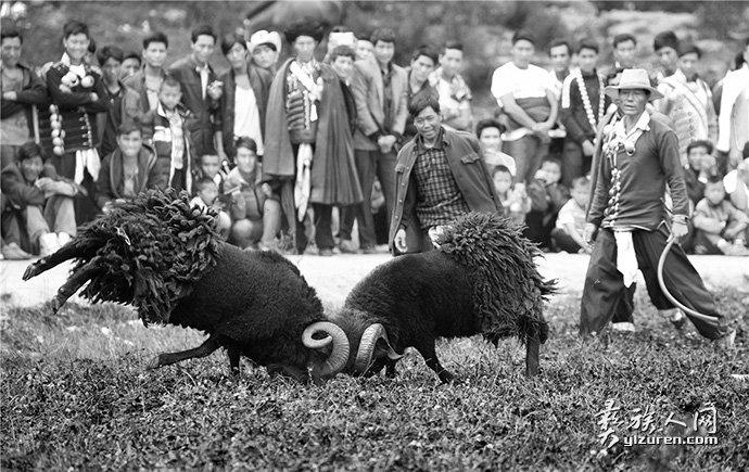 斗羊-周晓玎