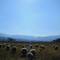 苏呷此色:秋日牧场