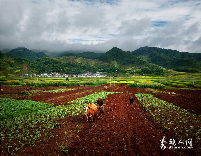 耕种-杨晓宁