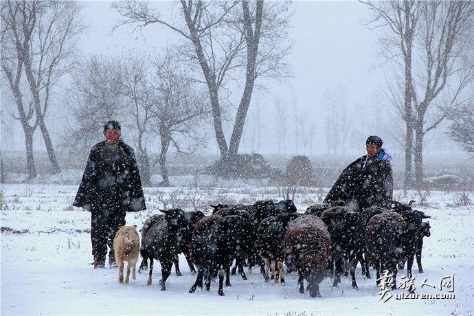 冬日牧羊-张东