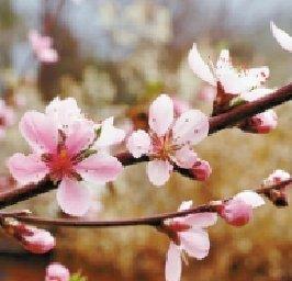 兰时越西万物春