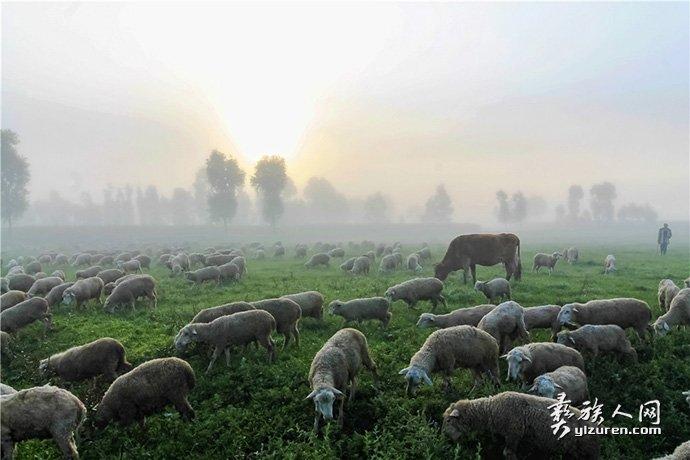 晨雾下的牧场-尹大兴
