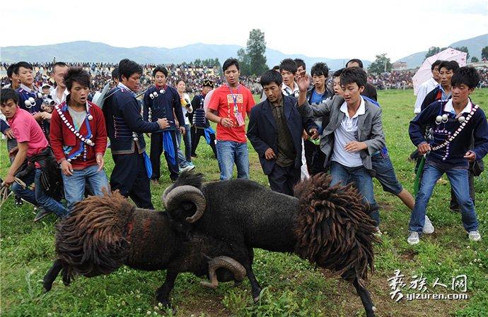 布拖斗羊-江宏景