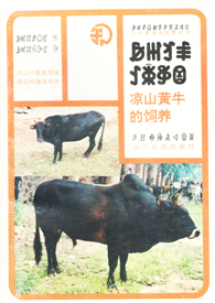 《凉山黄牛的饲养》