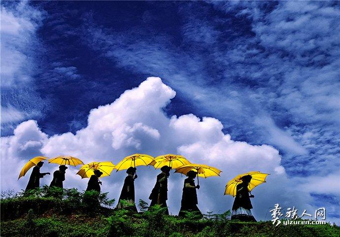 布拖黄伞凉山盛开的花-叶昌云