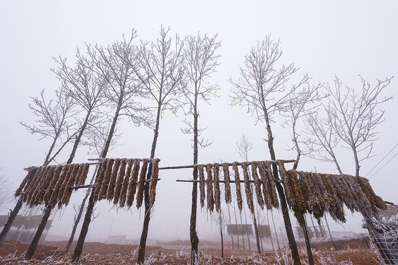 丙乙底冬季