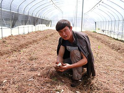 勤学善思谋发展——彝族青年周建发立足乡村发挥优势创业记