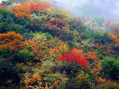 深秋时节:走进甘洛观赏红叶领略大自然的风情