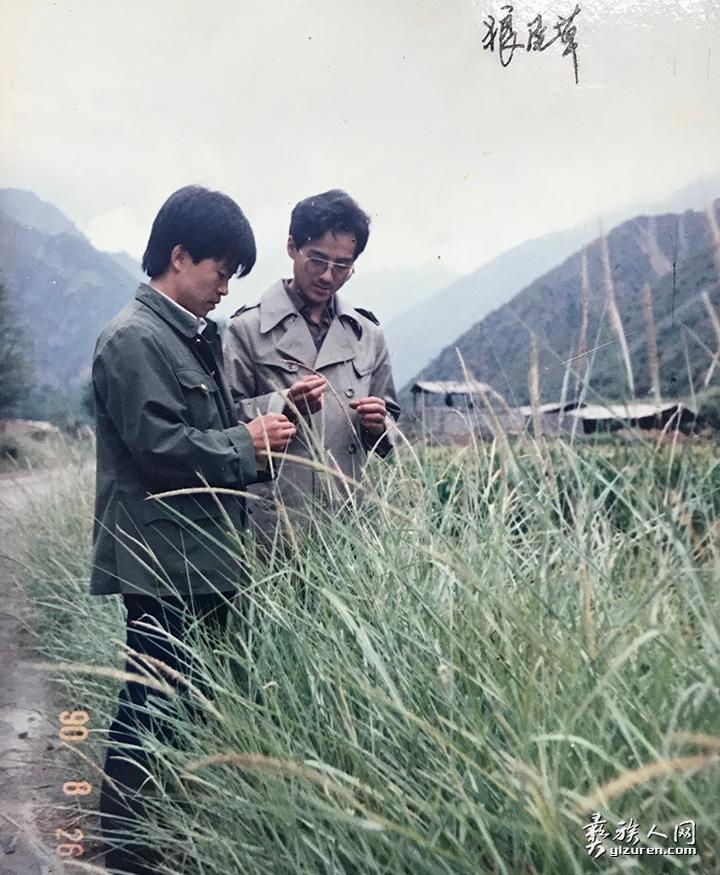 读研究生期间在野外考察牧草种质资源.jpg