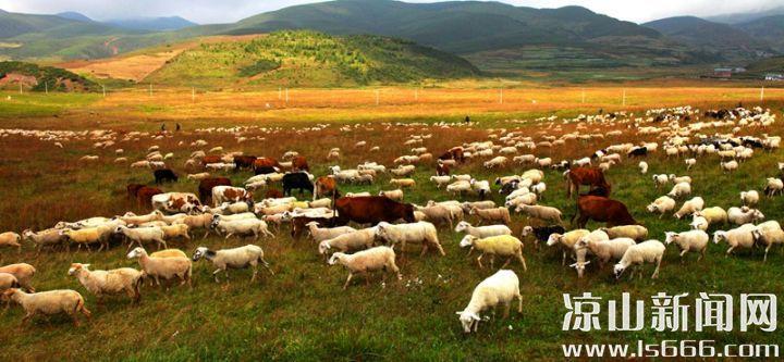"""尼地乡采取""""支部+合作社+农户""""的经营模式,助力脱贫攻坚"""