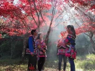 美丽彝乡——紫溪山