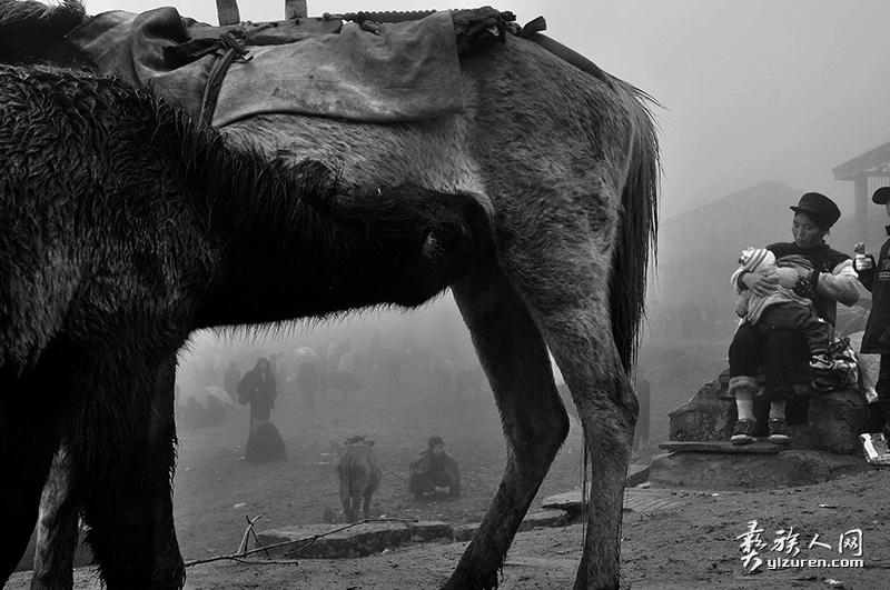 集市旁边哺育的母亲和她的马(凉山布拖峨里坪乡)
