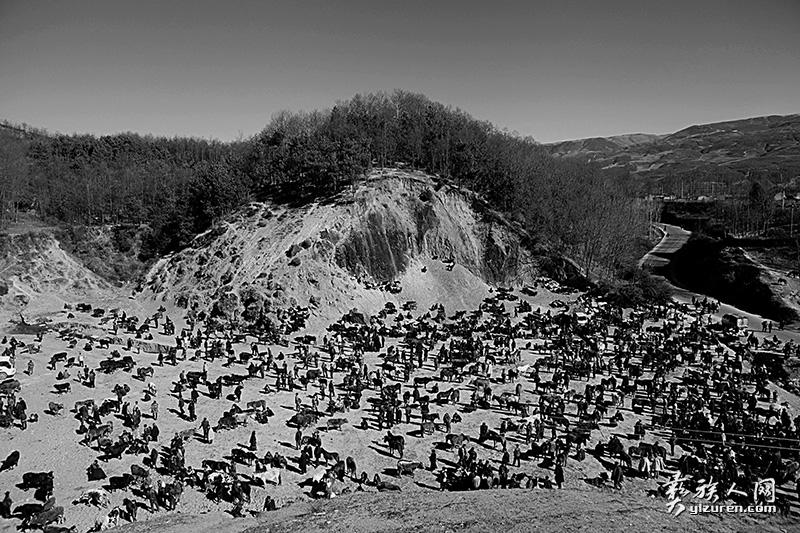 大山里的牛、马、羊交易市场(凉山布拖拖觉镇)