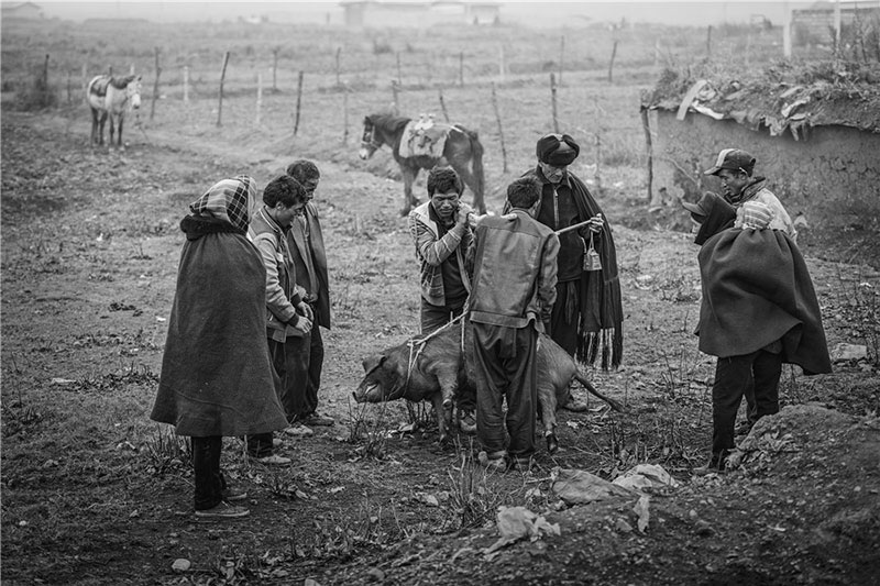 A pig is weighed before a trade between Yi people. Photo by He Qinming. [Photo provided by photoint.net]