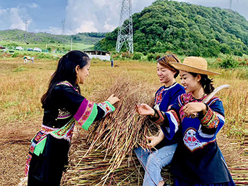 云南丘北公开征集彝族音乐作品,快快参与吧!