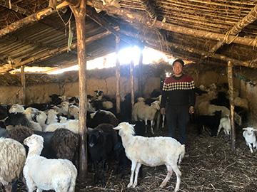 美姑|布尔村羊倌们的暗中较量