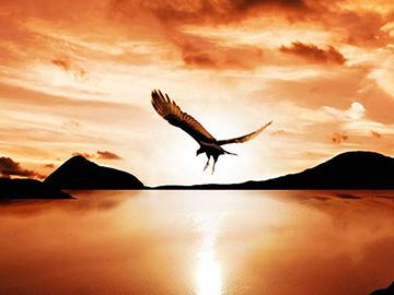 阿洛夫基散文诗:雄鹰落脚的地方(外二首)