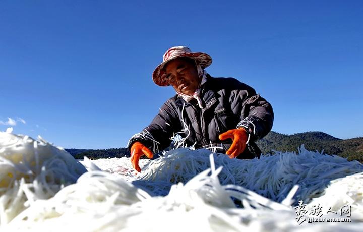 2018年 1月21日。云南省江川县江区放马村。在寒冷的冬季里,农民穿着冬衣正在晒棚上摊开抛撒萝卜丝进行晾晒。