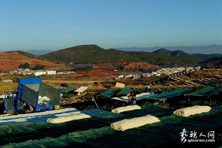 2020年 1月16日。云南省红塔区李井村。该村已经家家户户建盖了别墅,农民在充满着希望的田野里劳动着。