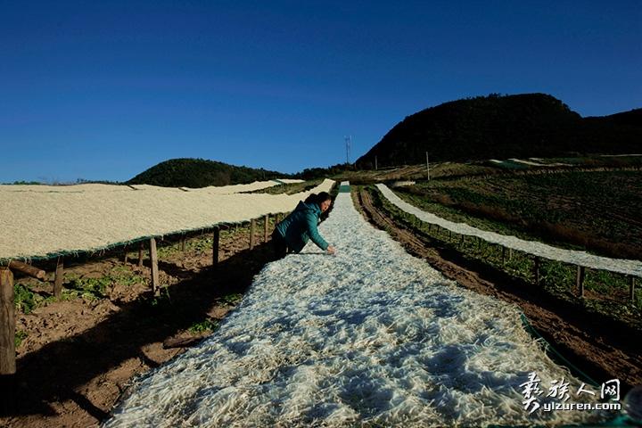2020年 1月12日。云南省江川县江区小坝村,村民正在检查萝卜丝的晾晒情况。