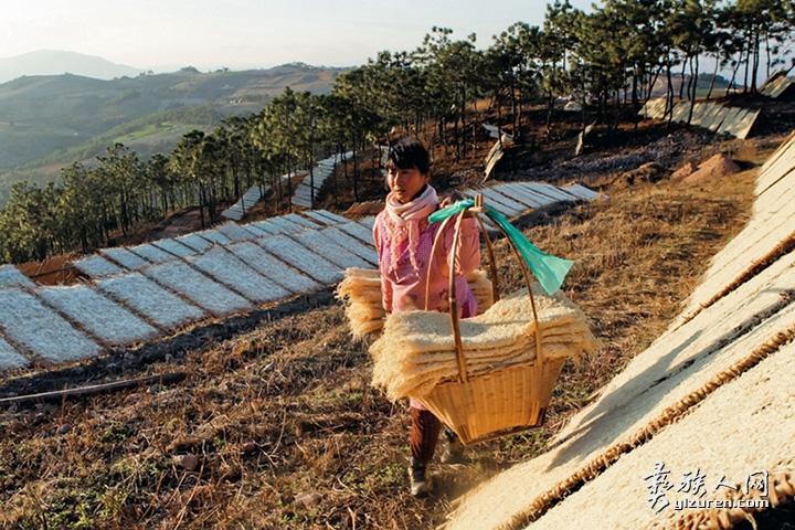 2014年 1月23日。云南省峨山县小雨来救村。一位妇女将已经晒干了的萝卜丝肩挑收回。