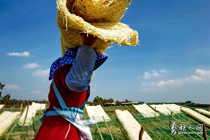 2018年 2月10日。云南省江川县江区放马村。村民正在收取已经晒干了的萝卜丝的。