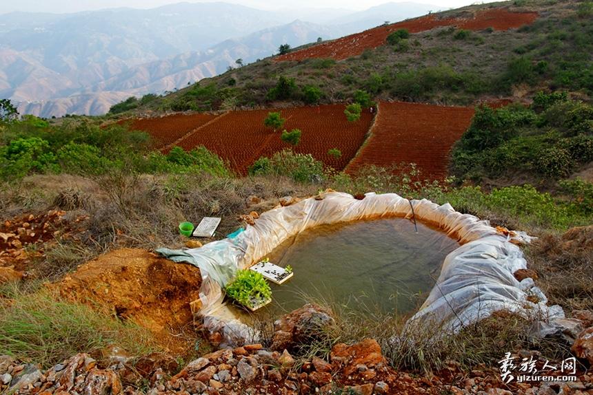 """2019年5月18日。云南省玉溪市元江县罗垤村。""""穷则思变"""",在长期的与干旱斗争中,烟农们会利用自然地势落差高低,在地势高处,简单刨出一个坑,去很远的地方来水倒入存放,再置入一根塑料管,供地热低的烟地灌溉用水。"""