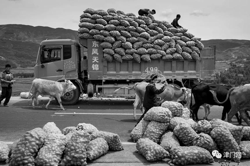 今年的土豆又大丰收了。