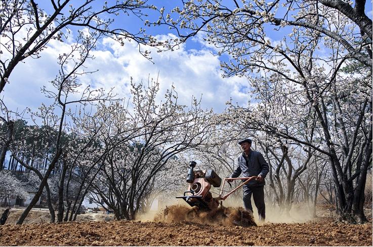 《樱桃树下》、尧雄伟(摄)凉山州文化广播电视和旅游局供图