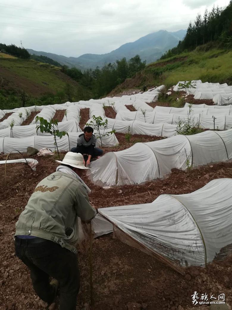 第一书记赵志朋(左一)在栽种海椒