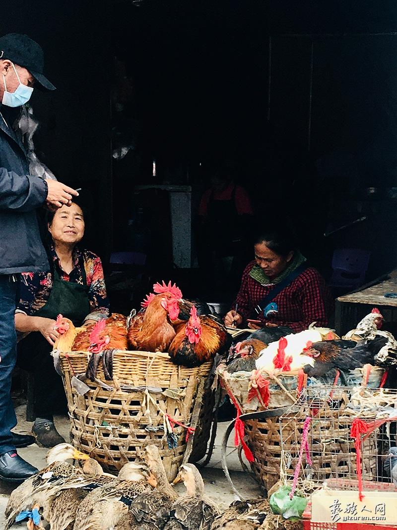 卖鸡的小摊