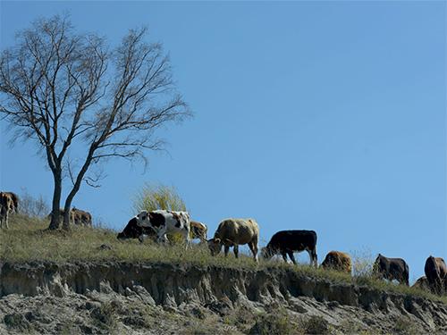 彝族民间故事:从天上下来的牛