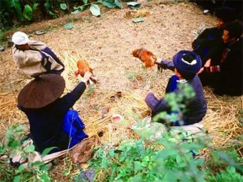 蔡富莲:凉山彝族毕摩文献《疟责哈姆尼》与彝族对瘟疫的认识
