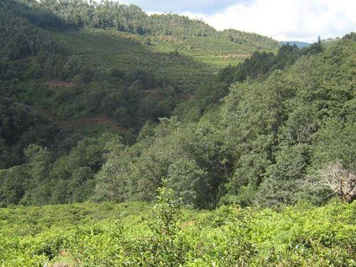 彝族生计、文化与林业传统知识——以云南省南华县为例