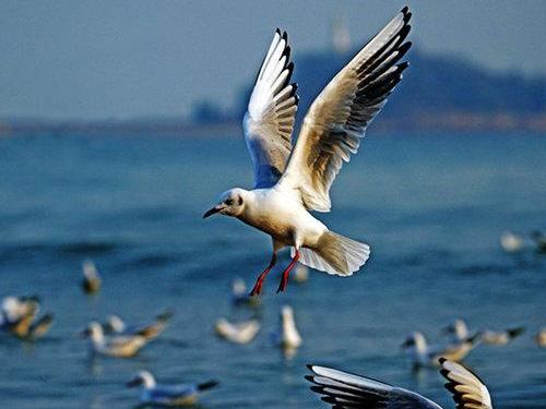 李代珠诗歌:《海鸥》(外二首)