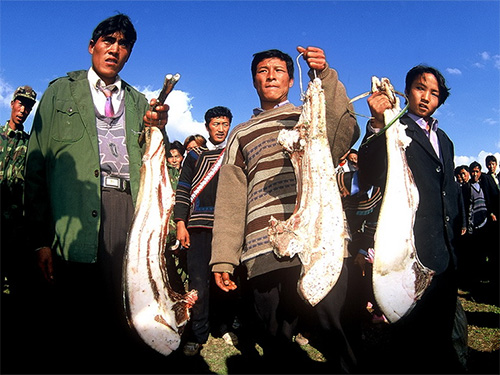 卢志发:彝族十月年初探