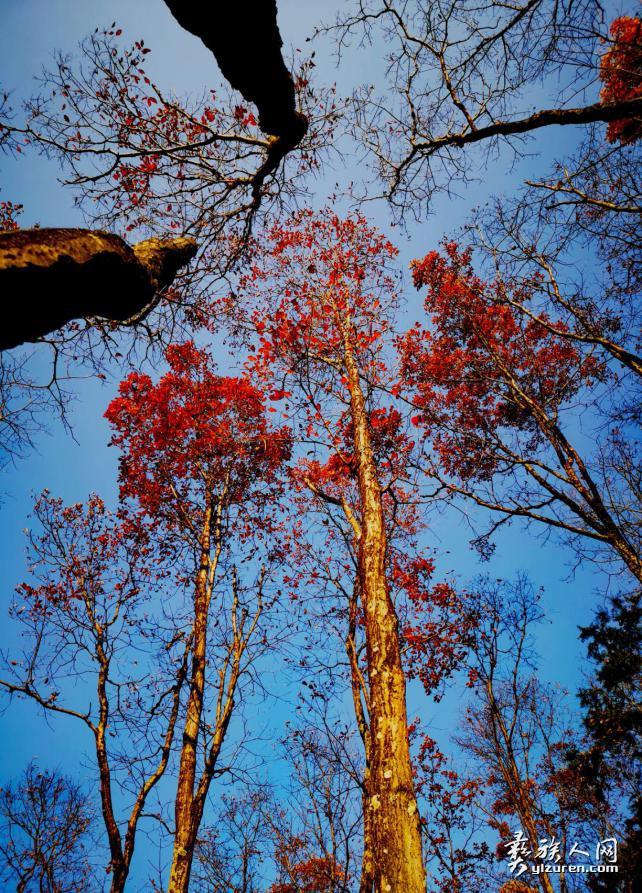 秋色红叶 (哈土 摄)