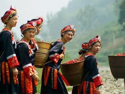 彝族歌舞文化——九龙彝族民间歌谣