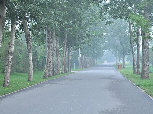 何宗林:漫步路上的随想