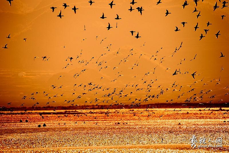 《鸟的乐园》-张东摄--乐安乡
