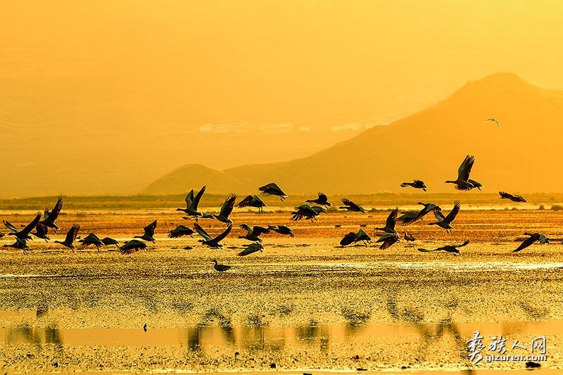 《鸟的天堂》--张东摄-乐安乡